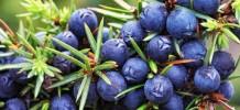 Juniper Berry Himalayan Essential Oil, 10ml