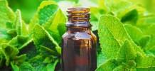 Peppermint Premium Essential Oil, 10ml