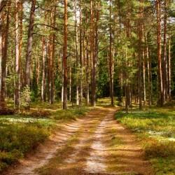Jalutuskäik metsas aroomiõli, 30g