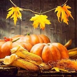 Harvest Type Fragrance Oil