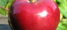 MacIntosh Apple Fragrance Oil