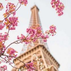 Paris Le Fleur Fragrance Oil