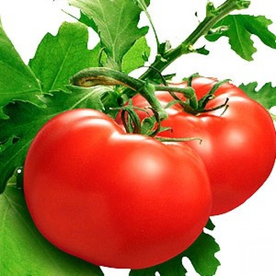 Tomato Leaf Fragrance Oil
