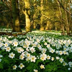 Woodland Blooms Fragrance Oil