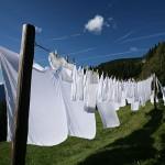 Clean Cotton Type aroomiõli, 30g