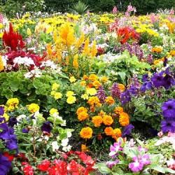 Flower Garden Fragrance Oil, 30ml