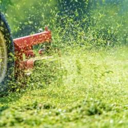 Freshly Cut Grass Fragrance Oil