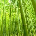 Fresh Bamboo Type aroomiõli, 30g