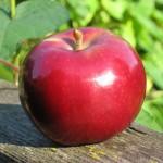 Värske õun aroomiõli, 30g