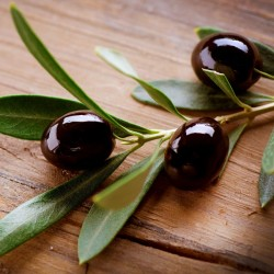 The Olive Branch Type Fragrance Oil